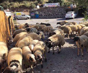 Ataşehir Adaklık