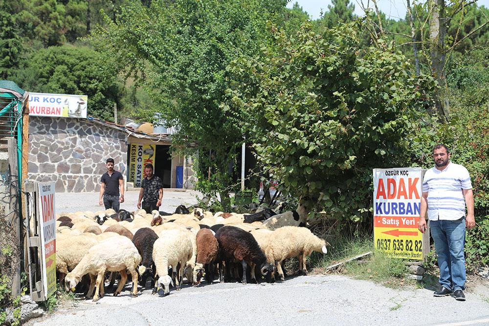 Anadolu Yakası En Ucuz Adak Satış Fiyatları